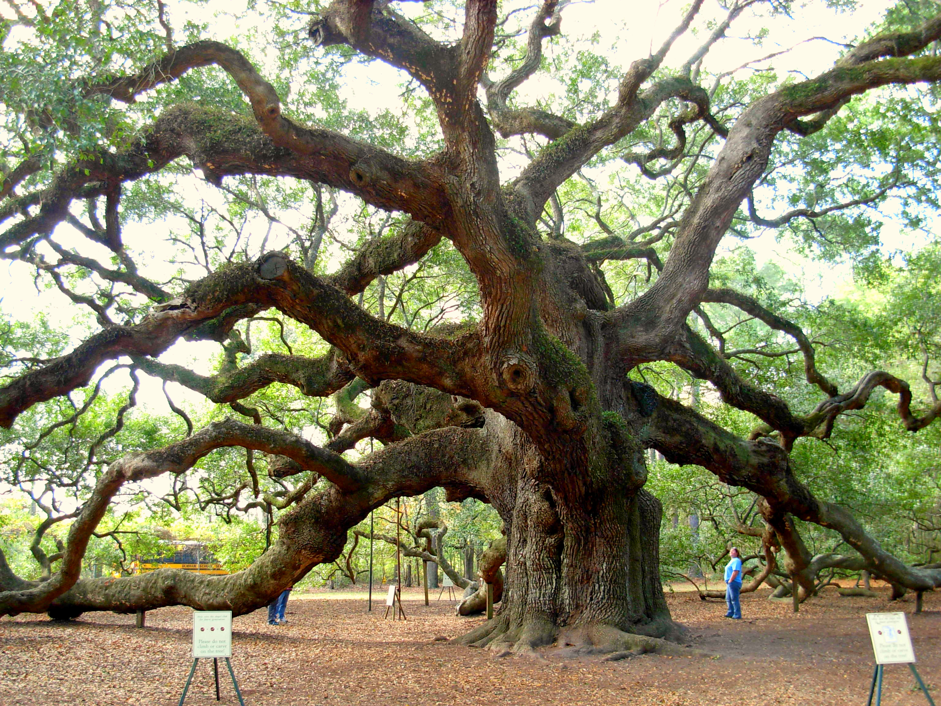 Angel Oak John's Island South Carolina ghosts haunted