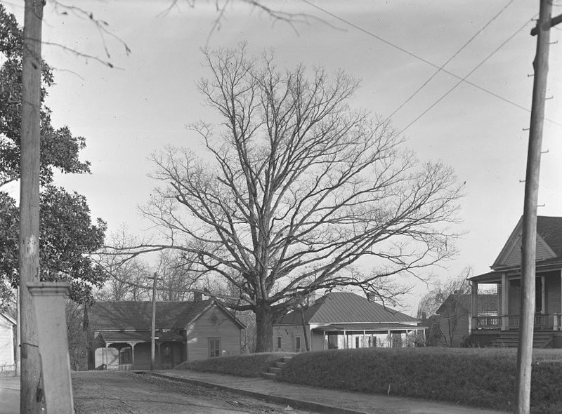 Tree That Owns Itself Athens Georgia