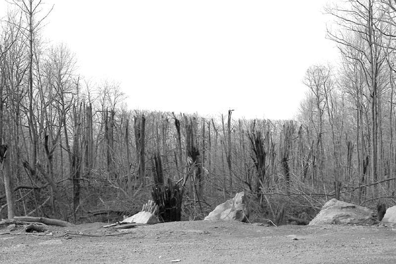TWA Flight 514 crash site Virginia