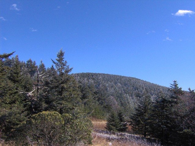 Roan Mountain North Carolina
