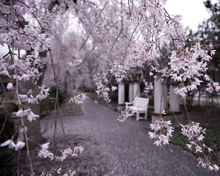 gardens at Reynolda Winston-Salem NC