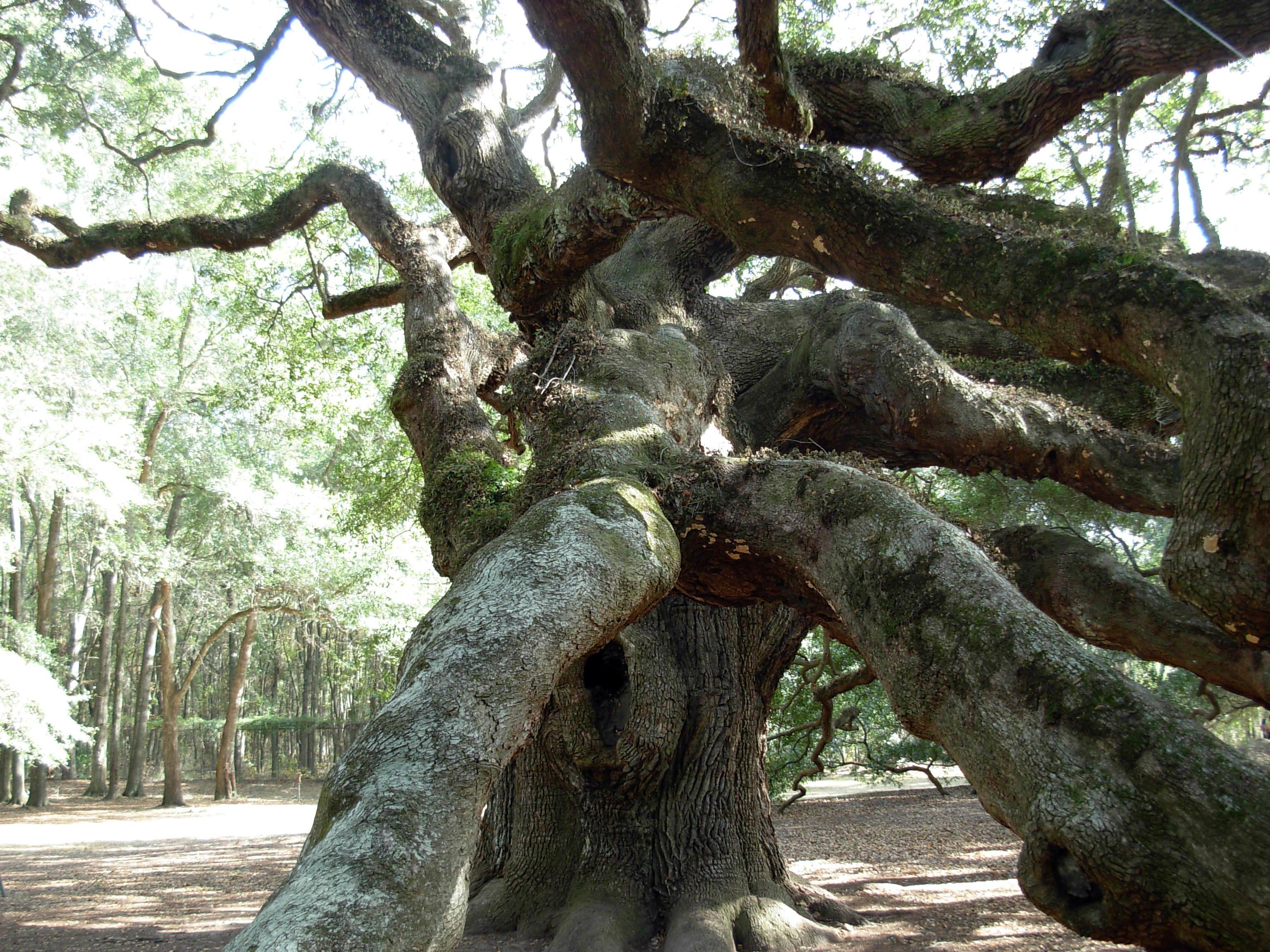 Angel Oak John's Island South Carolina ghosts haunted