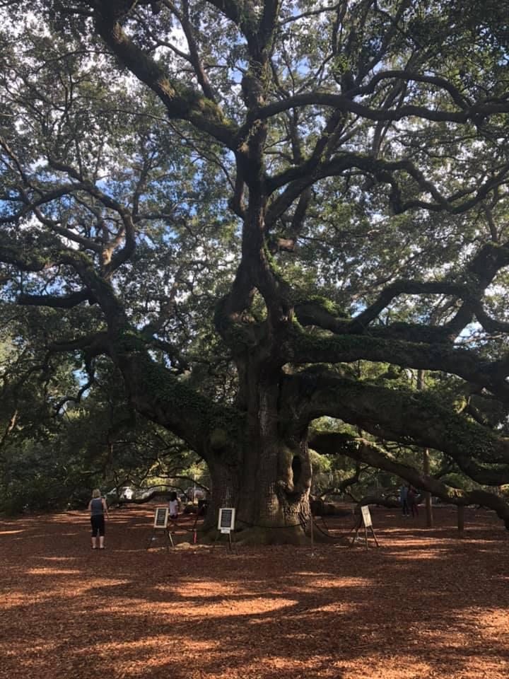 Angel Oak John's Island South Carolina