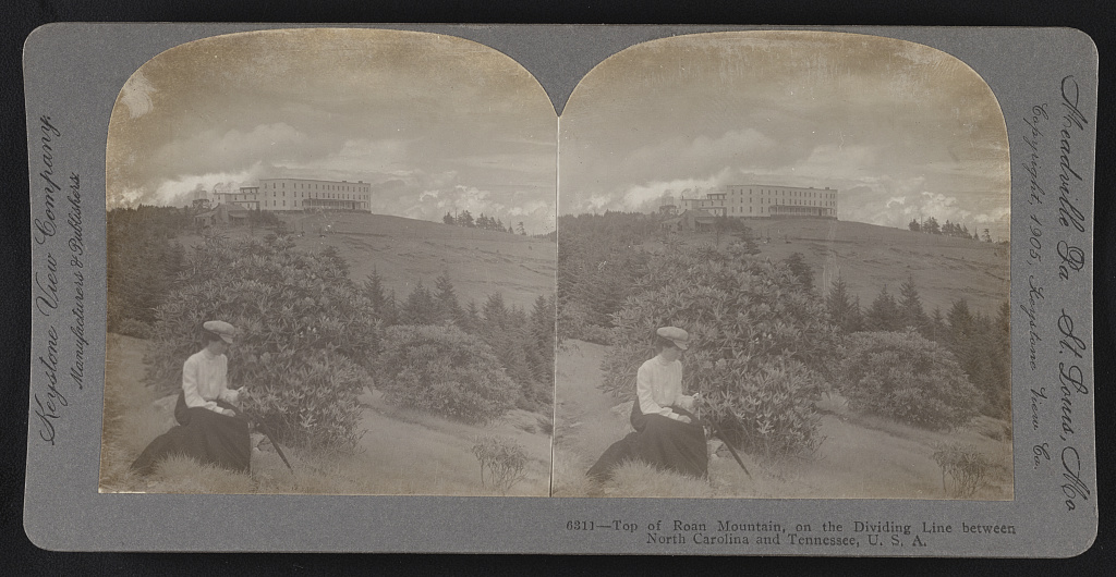 stereoscopic view Rhododendron Roan Mountain North Carolina Tennessee